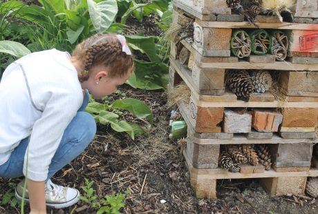 Bug Hotel at the Rediscovery Centre