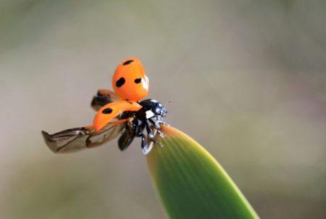 Biodiversity Photographer of the year